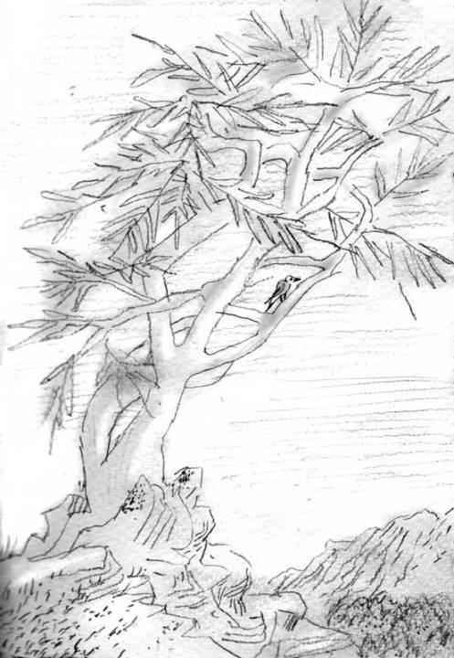 Arbre-à-flanc-de-côteau
